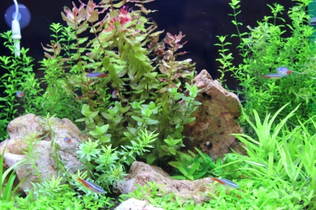 live coral: Empty aquarium with plants with small fishes