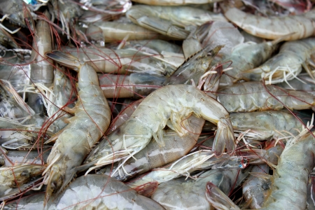 The large fresh shrimp at the market photo
