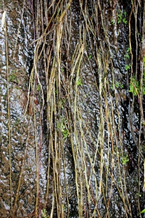Vine plant branches and barbed wire. Abstract background. photo