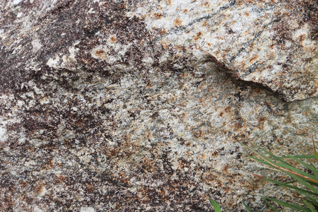 Stone texture - background
