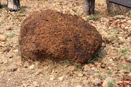 Laterite : Laterite is a soil and rock type rich in iron and aluminium and is commonly considered to have formed in hot and wet tropical areas. on ground field.High resolution image gallery.