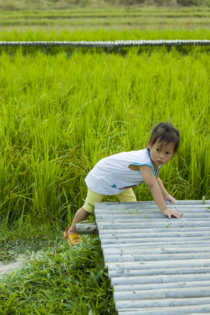 a small child  walks along in rice field road, High resolution image gallery. Фото со стока