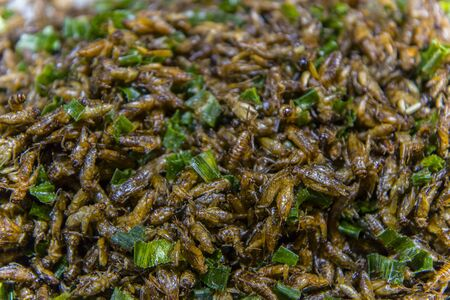 Fried insects on the streets of Chiangmai Road in Thailand  High resolution image gallery.