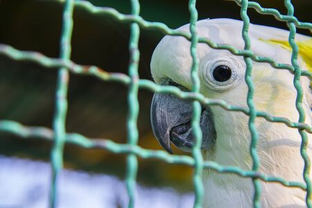 Cute bright eye little parrot bird in cage.  High resolution image gallery. Banco de Imagens