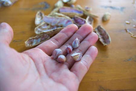 Hand holding boiled peanuts Thai healthy food peanut corn boil . Banco de Imagens