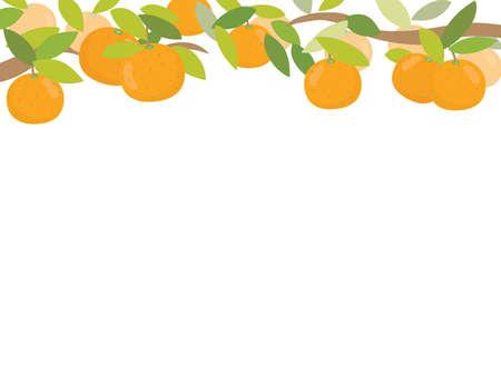 A frame of mandarin oranges