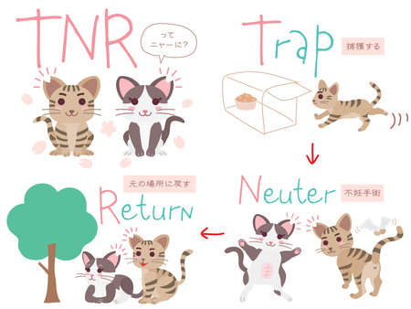 """Set illustration of the regional cat plan and Japanese letter. Translation : """"What is TNR?"""" """"Capture"""" """"Fix"""" """"Return it to the original place"""""""
