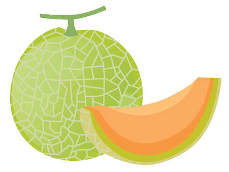 Illustration of the muskmelon with net pattern
