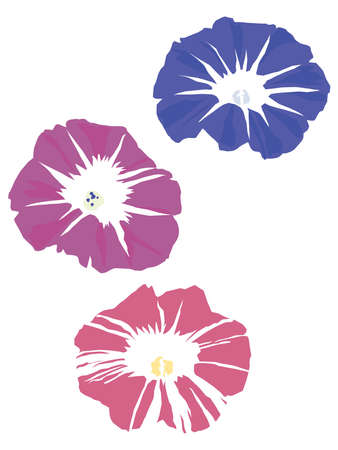 Morning glories which bloomed in the summer Vecteurs