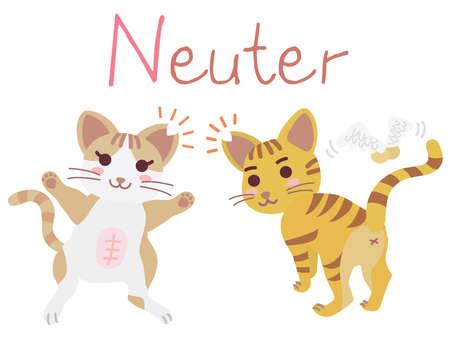 """Illustration of the regional cat plan of """"Neuter"""""""