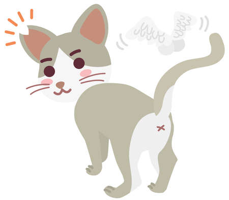 Boy of the regional cat which cut an ear
