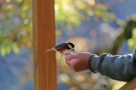 手のひらに乗って鳥 写真素材