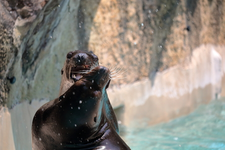 terrifying: Sea lion Is scary face