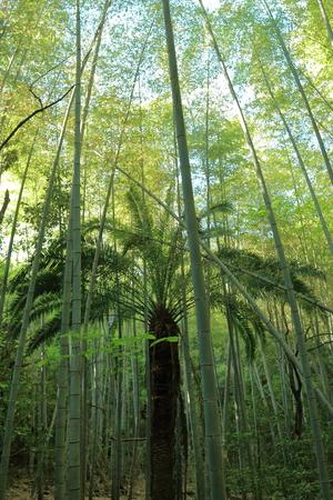 竹の林と熱帯の木