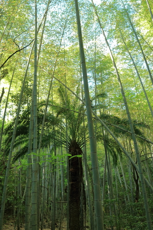 Bamboo forest and tropical tree Banco de Imagens