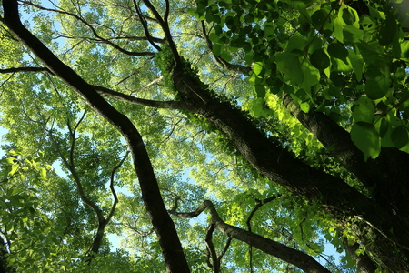 Look up fresh green