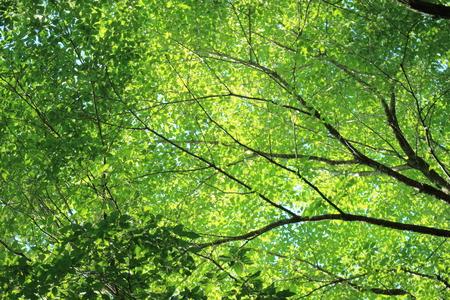 Fresh green and light