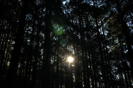 早朝の太陽と木 写真素材