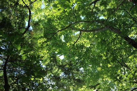 新鮮な緑を見てください。 写真素材