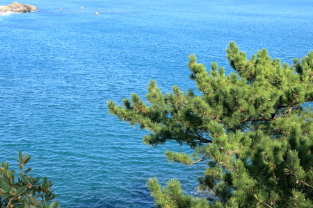 Pacific Ocean and pine trees (Katsura Beach)