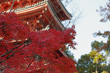 Precincts of autumn (five about Temple)