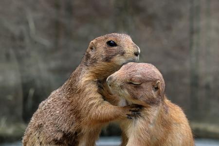 Hugging prairie dogs