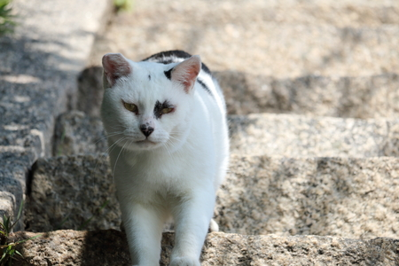 A cat who passed by the stairs (Kagawa Prefecture Ogijima)