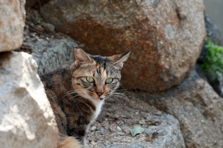 A cat who asks from the stone wall Ogijima (Kagawa)