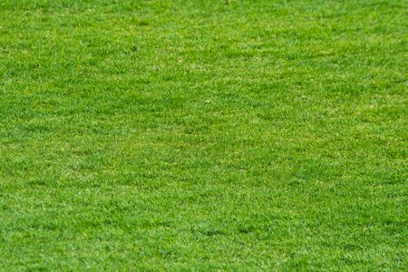 Green grass at the Stadium. The Texture Of The Lawn. The Grass Of The Stadium. Backgrounds and textures for Wallpaper.