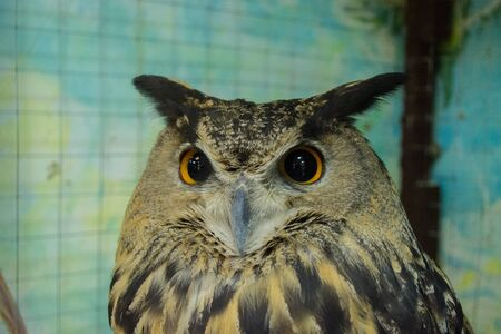 The piercing gaze of an eagle Owl. The owl sits in a locked cage Zoo overexposure. Treatment of wounded birds.
