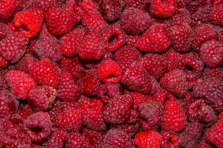 Background-texture of red overripe raspberry Rubus idaeus. Ripe raspberry in close-up. Soft selective focus. 스톡 콘텐츠