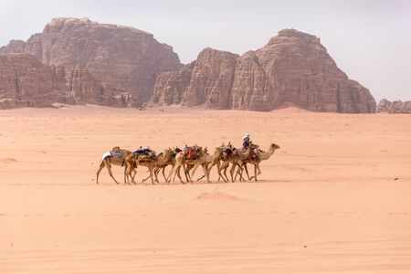 A lone caravan of camels is walking through the desert in the background are yellow-brown mountains. Shot in the Wadi Rum desert in Jordan in March 2020.