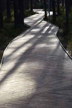 Wood flooring walkway in a forest park