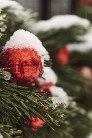 Christmas background red ball on a green tree branch with snow.