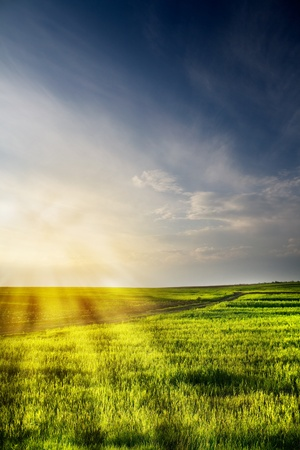 Dramatic landscape of wheat field with blue sky and bright sun Stock Photo - 8535494