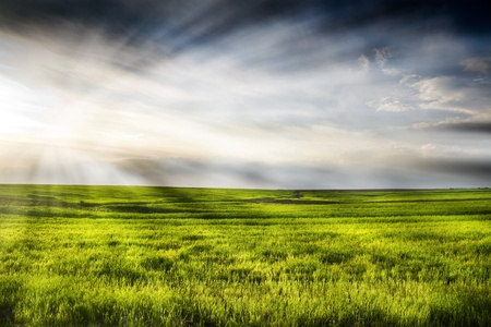 Dramatic landscape of wheat field with blue sky and bright sun Stock Photo