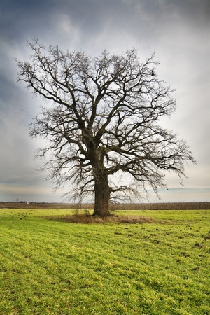 Photo of a lonely tree on green meadow