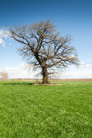 Photo of a lonely tree on grean meadow
