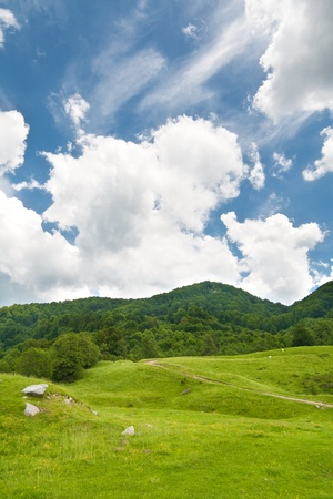 Summer landscape of green forest with bright blue sky Stock Photo