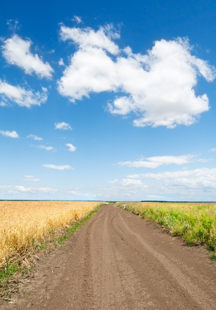 Path through the wheat field under blue sky