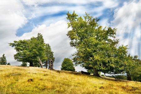 Photo of green trees over blue sky Stock Photo