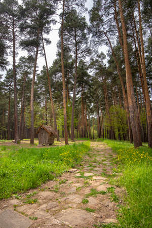 Natural Forest of Spruce Trees and old wooden shed or house . Colorful landscape with enchanted trees and Scenery with path in dreamy spring green forest. Bulgaria wide country landscape Stockfoto