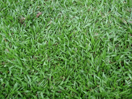 mitzrah: Natural Tropical Grass on a Field Stock Photo