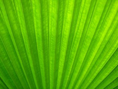 mitzrah: Sun lit leaf of a palm type tree - Soft Focus