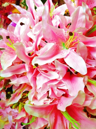 closeup: A close up of a bunch of orchid flowers Stock Photo