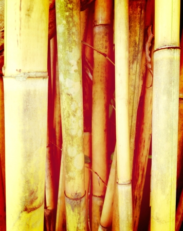 A family of bamboo trees growing close together