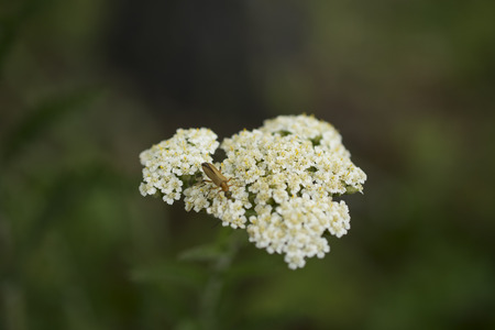 hojas: bug on white flower shape with Stock Photo