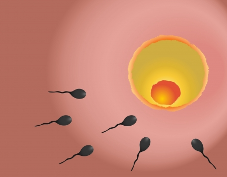 Illustration of fertilisation
