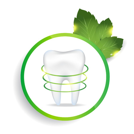 peppermint: Realistic tooth. Peppermint leafs. EPS 10 vector file.