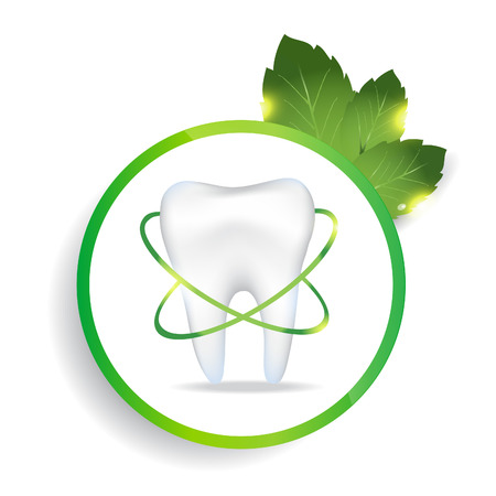 Realistic tooth. Peppermint leafs. EPS 10 vector file.